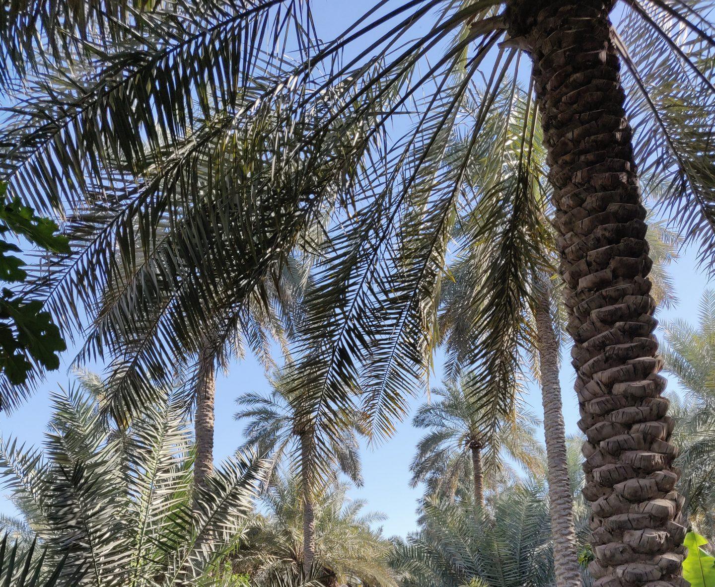 مزرعة علي بوصالح